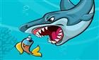 Büyük Köpekbalığı