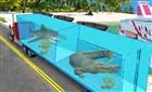 Deniz Hayvanı Taşıma