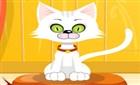 Kedi Besle