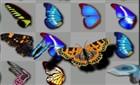 Kelebek Birleştirme