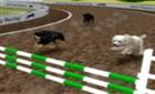 Köpek Yarış Simülatörü