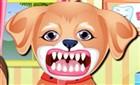 Sevimli Köpek Diş Bakımı
